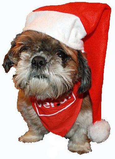 Weihnachtshund, Besondere Dienste NRW,